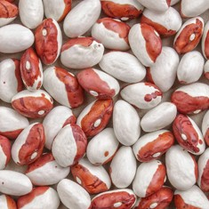 Royal beans