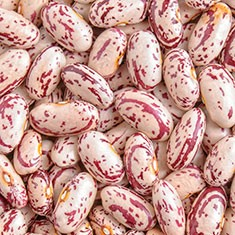 Red Speckled beans/Borlotti